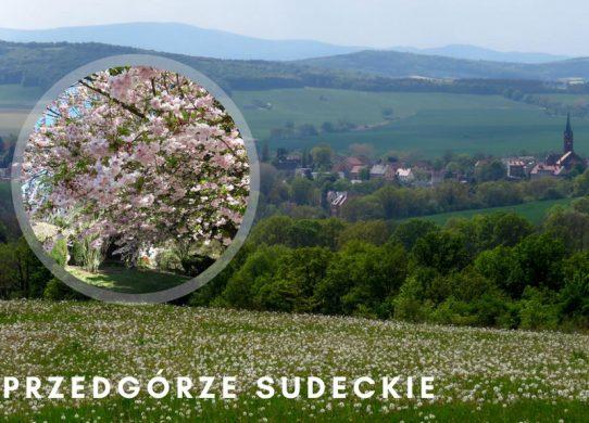 Przedgórze Sudeckie